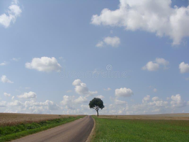 Дерево Solitair стоковые фото