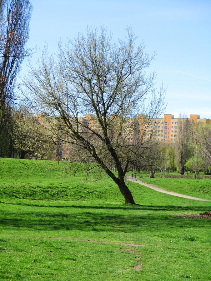 Дерево Tlonely в парке стоковое изображение rf