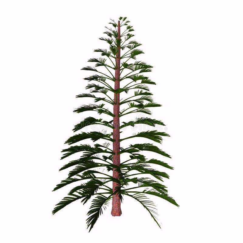 Дерево Walchia иллюстрация вектора