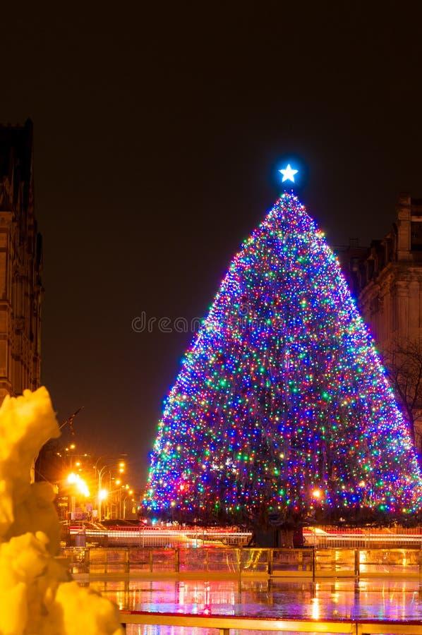 Дерево Xmas Сиракуза стоковое изображение
