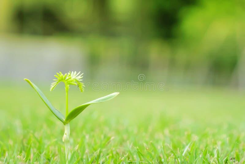 Деревце зеленого цвета крупного плана на предпосылке пола травы с космосом экземпляра в концепции начала стоковое фото rf