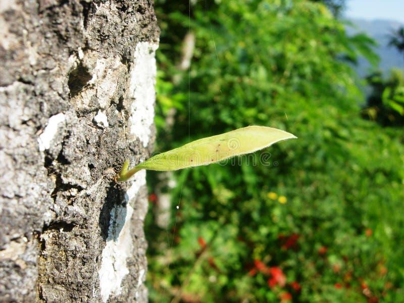 Деревце на расшиве дерева стоковое изображение