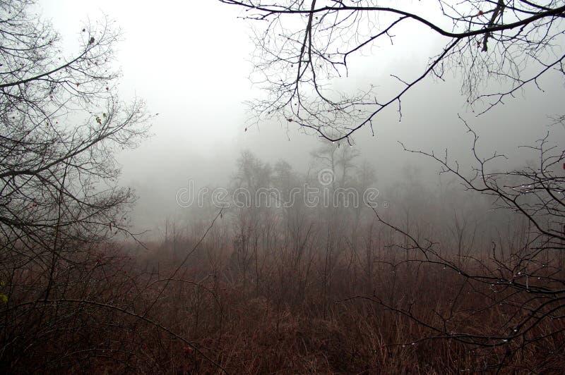 Деревья без листьев в унылом туманном пейзаже стоковое фото rf