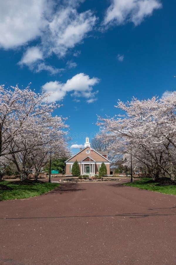 Деревья весеннего времени предусматриванные с цветенями вне здания поселка стоковые изображения