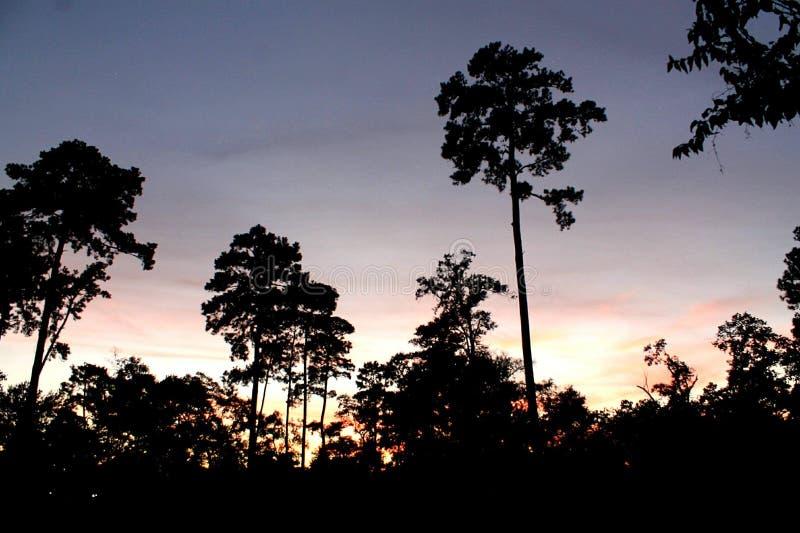 Деревья вечера захода солнца стоковая фотография rf