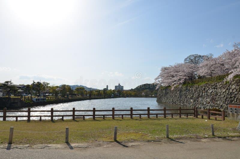 Деревья вокруг замка Himeji стоковое фото rf
