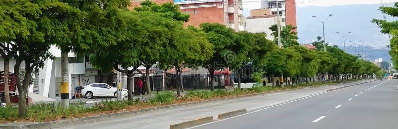 Деревья выровнянные с medellin стоковое изображение rf