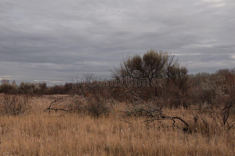 Деревья в болоте осенью стоковое изображение rf
