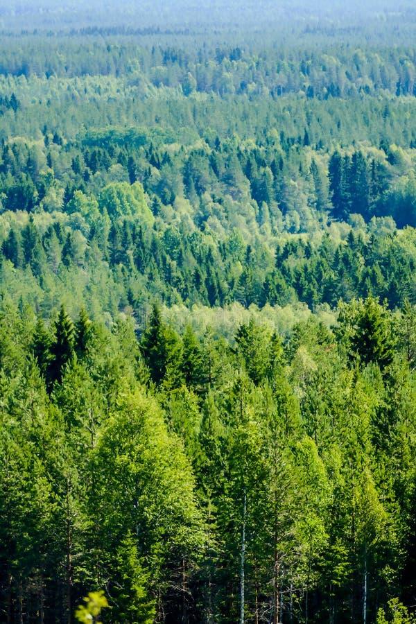 деревья в горах, в Швеции Скандинавии северной Европе стоковая фотография rf