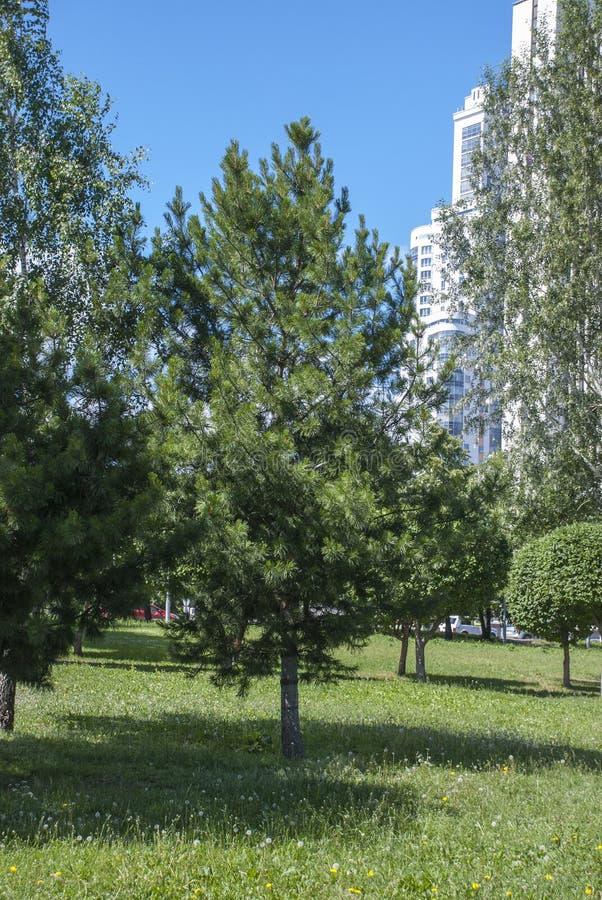 Деревья в городе стоковое изображение