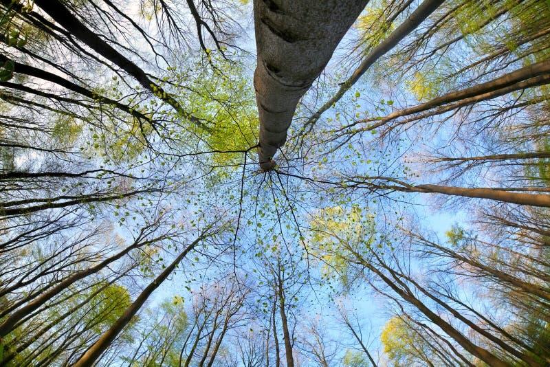 Деревья в лесе над голубым небом стоковое изображение