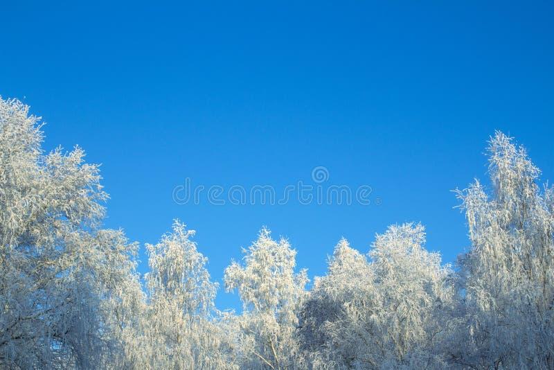 Деревья в заморозке, против голубого неба стоковые фото