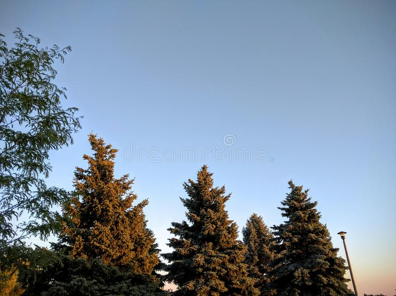 Деревья в заходе солнца стоковое изображение