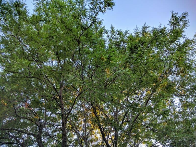 Деревья в заходе солнца стоковое фото