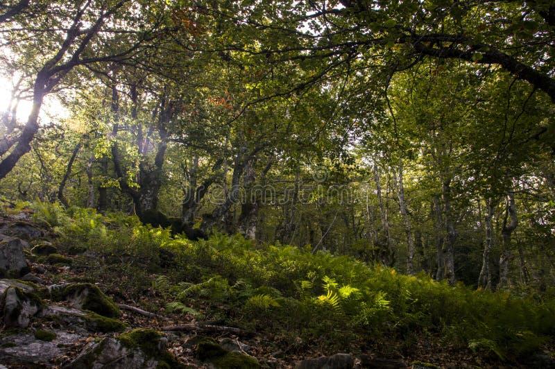 Деревья в изумительном лесе стоковые изображения rf