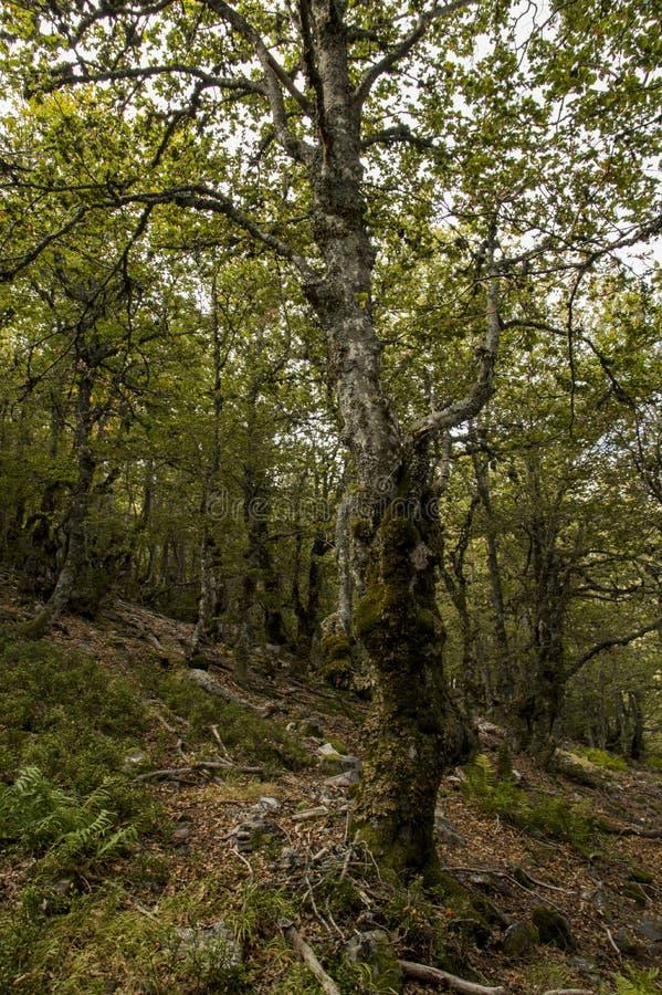 Деревья в изумительном лесе стоковая фотография rf