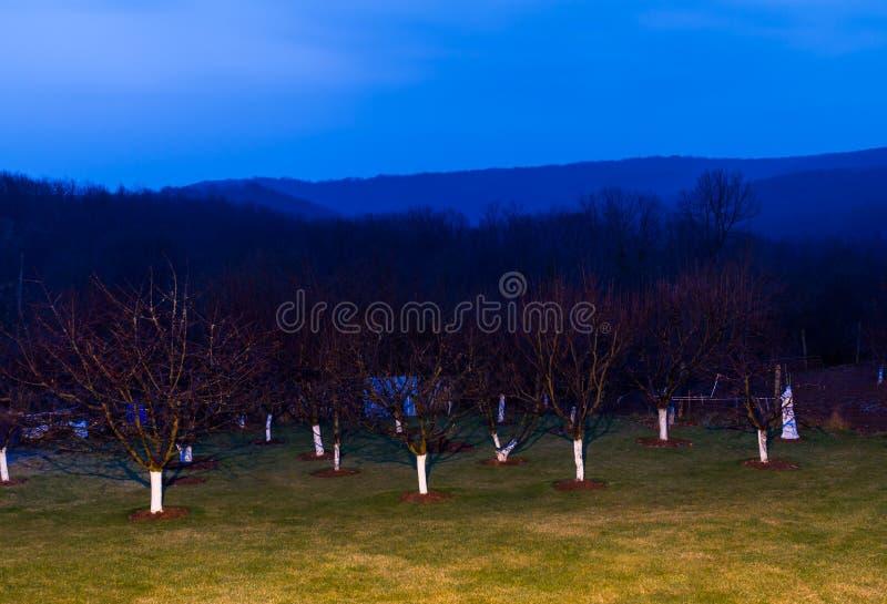 Деревья в лесе стоковые фото