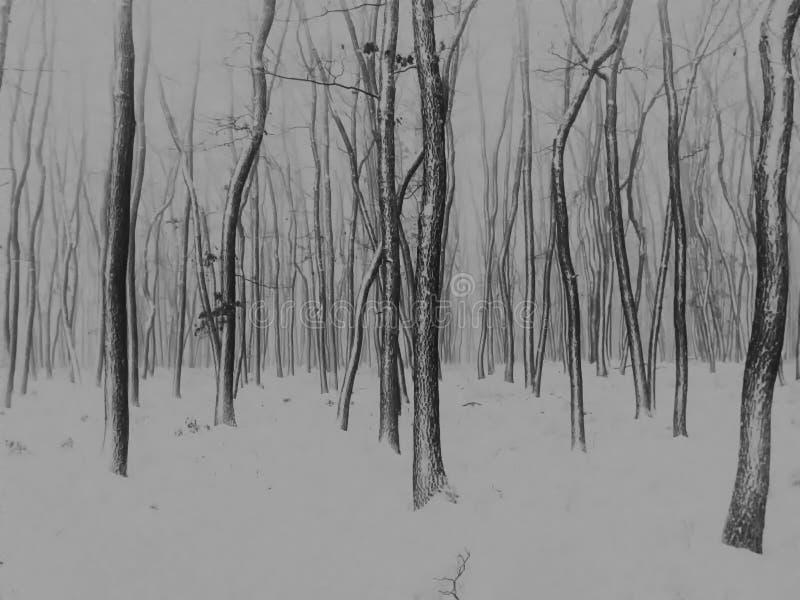 Деревья в лесе покрытом с свежим снегом после снежностей стоковое изображение