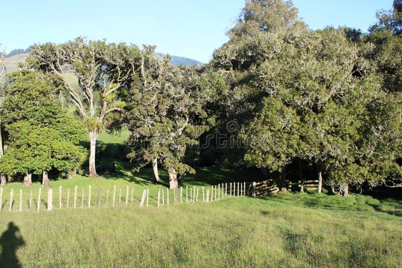 Деревья в луге обрабатываемой земли Новой Зеландии стоковые фотографии rf