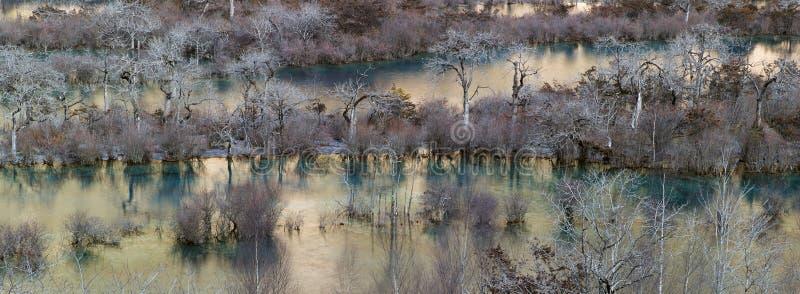 Деревья вдоль реки стоковое изображение rf