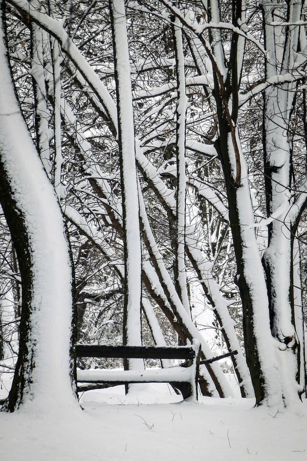 Деревья в парке и стенд покрытый с снегом стоковая фотография