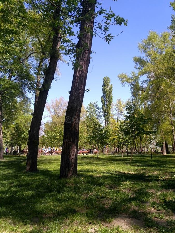 Деревья в парке стоковые фотографии rf