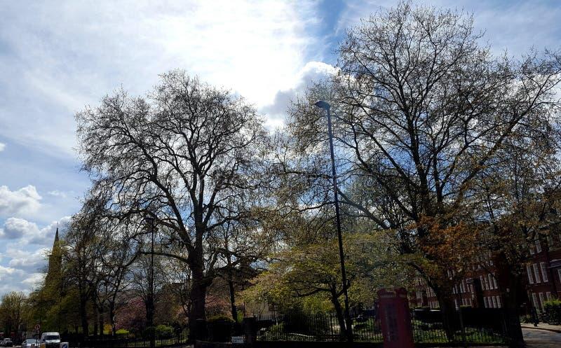Деревья в парке стоковые изображения