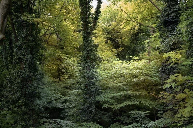 Деревья в пуще стоковые изображения