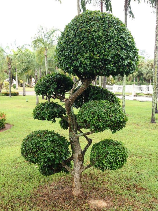 Деревья в саде стоковое изображение