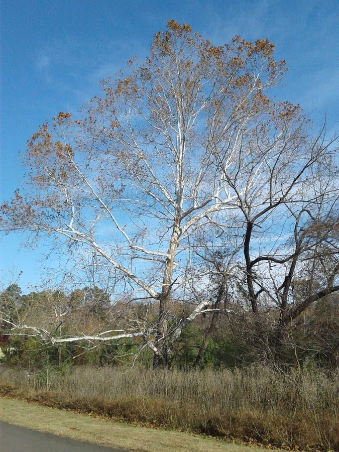 Деревья в сезоне падения стоковая фотография