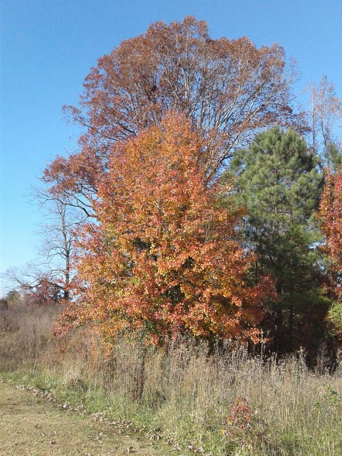 Деревья в сезоне падения стоковые фото