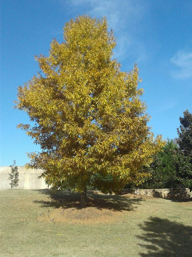 Деревья в сезоне падения стоковые изображения