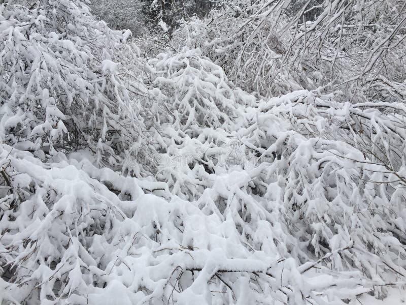 Деревья в снежке стоковые фото