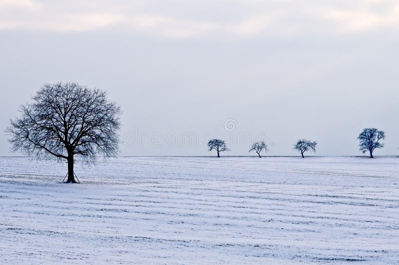 Деревья в снежке стоковое фото