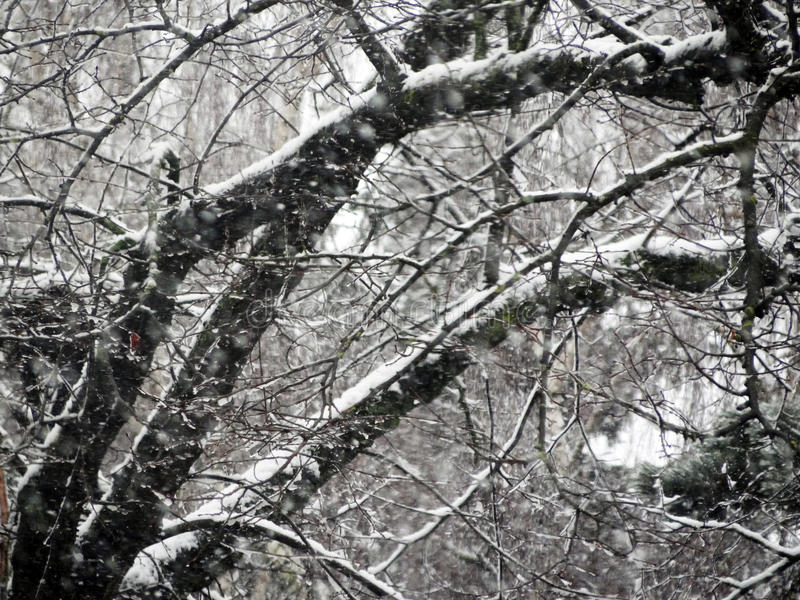 Деревья в снежке стоковые изображения