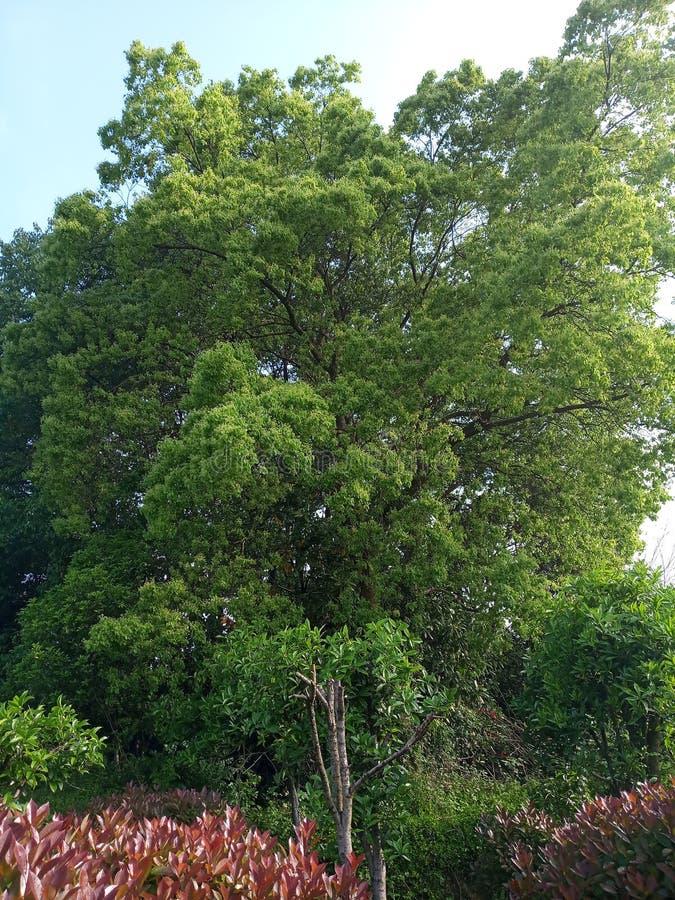 Деревья в солнце стоковое фото