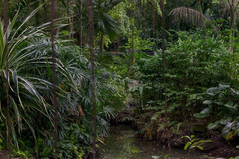 Деревья в сочном тропическом лесе стоковые изображения