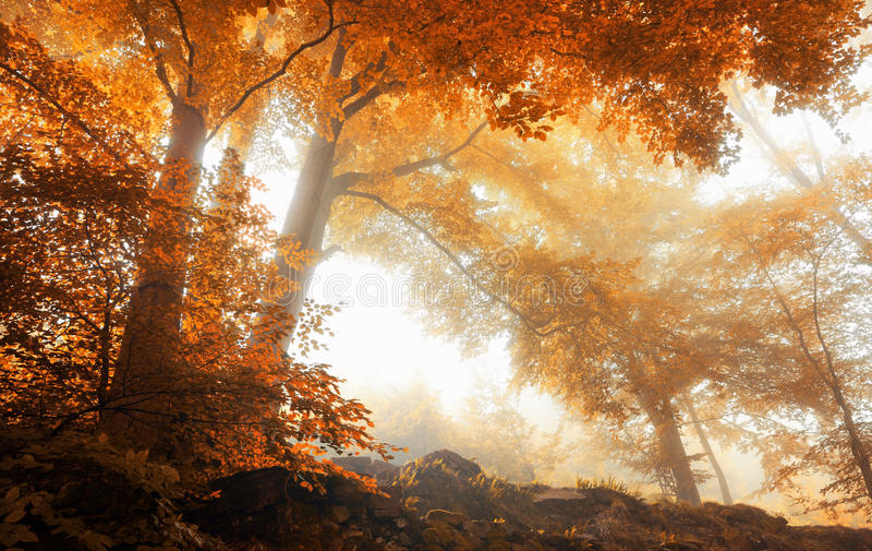 Деревья в сценарном туманном лесе в осени стоковое фото