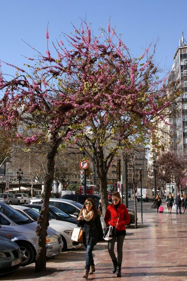 Деревья в цветении показывая прибытие весны к Валенсии, Испании стоковое изображение