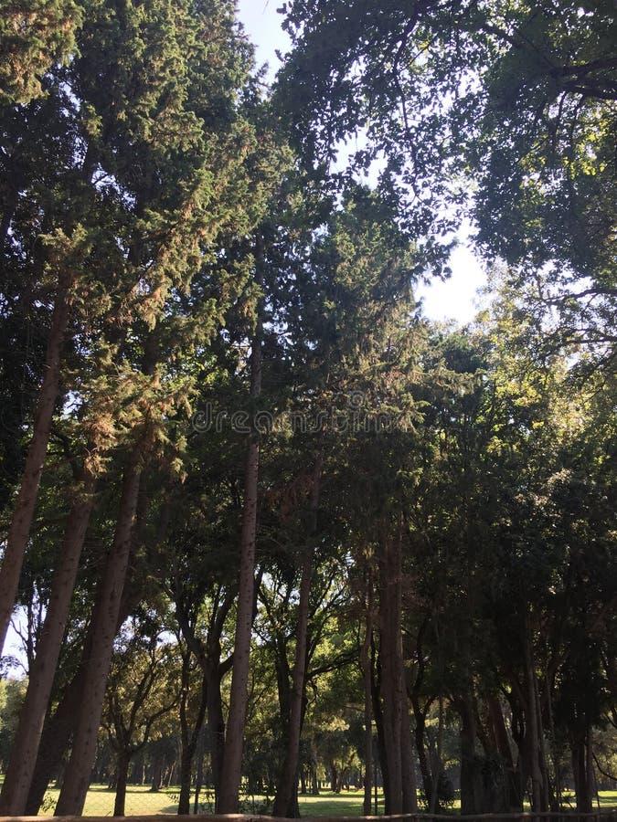 Деревья в чаще стоковое фото rf