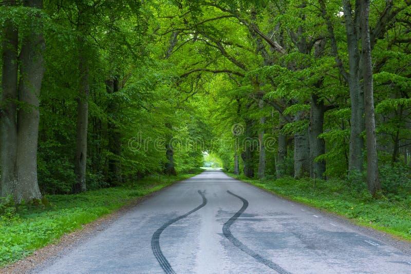 Деревья дороги леса вперед на сельской местности, следах трассировок покрышек покрышки автомобиля на дороге, тени лесного дерева стоковое изображение
