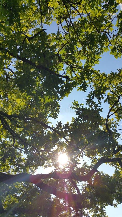 Деревья лета стоковые фото