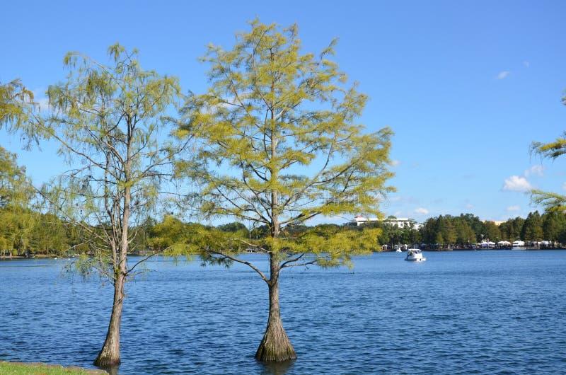 Деревья лета стоковая фотография rf