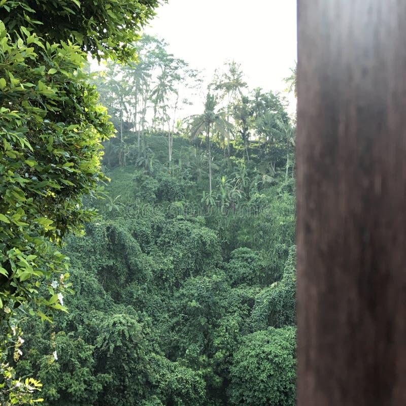 Деревья джунглей деревянные стоковые изображения