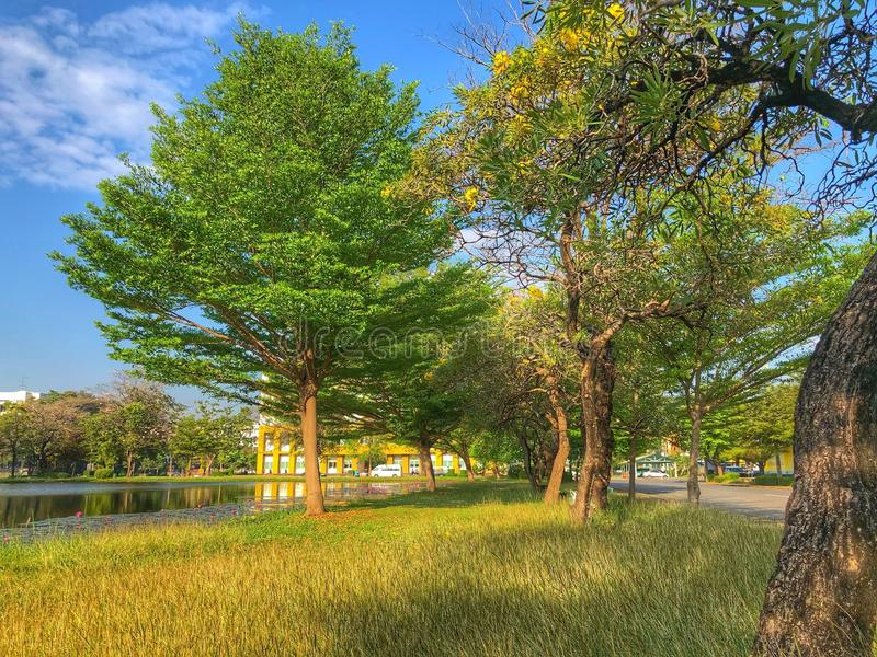 Деревья засевают травой и pond стоковые изображения