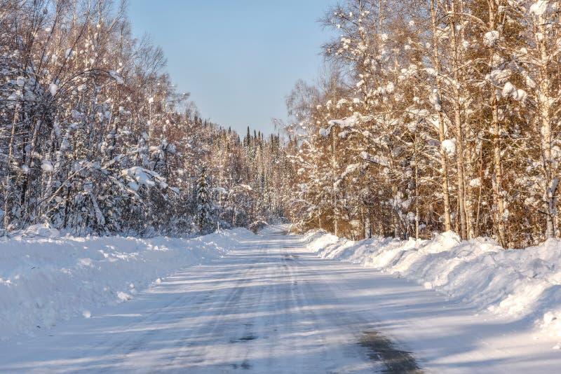 Деревья зимы снега леса дороги снежные стоковые изображения
