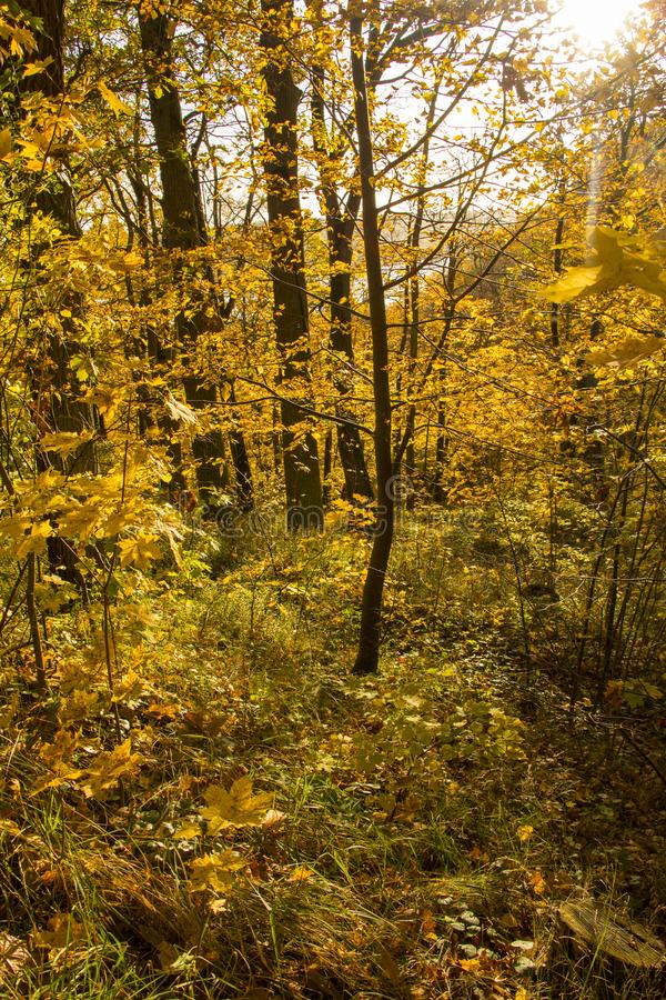 Деревья золота Осень стоковое фото rf
