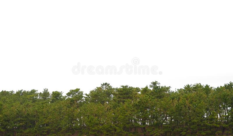 Деревья изолированные на белой предпосылке Зеленые растения садовничают парк стоковые фотографии rf