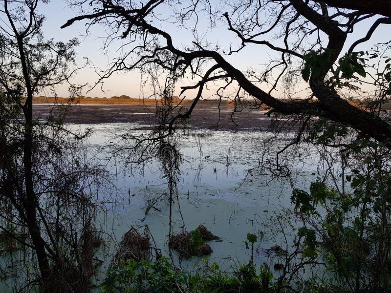 Деревья и вода стоковые изображения rf