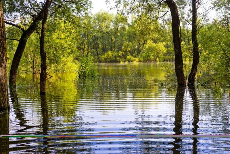 Деревья и вода стоковое фото